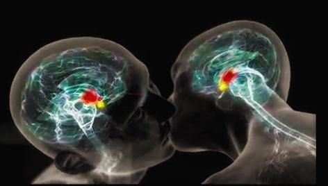 Aussit t dit ocytocine bouillie de cerveau for Neurone miroir autisme